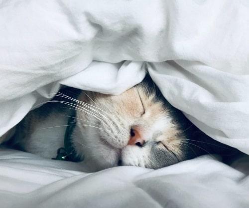ngủ đủ giất